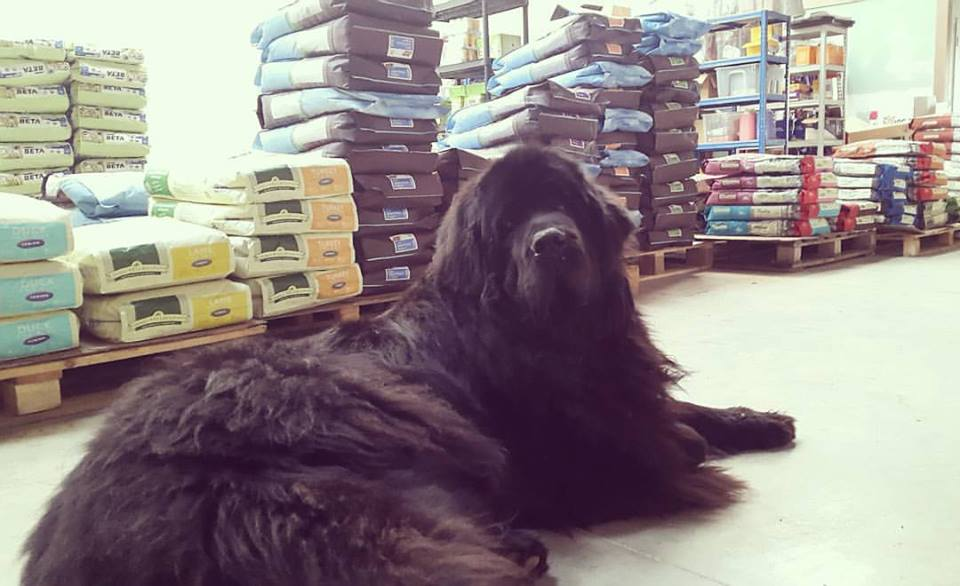 Large Dog Beds Sale - plus our new home