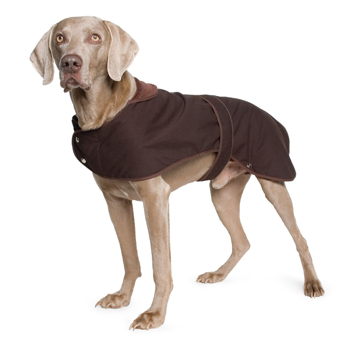Cooling Jackets For Dogs Uk