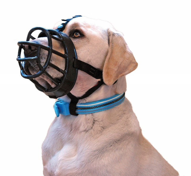 Muzzle That A Dog Can T Get Off