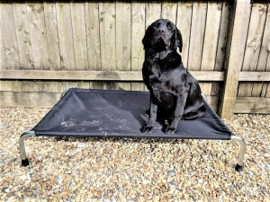 Berkeley Heavy-Duty Raised Dog Bed
