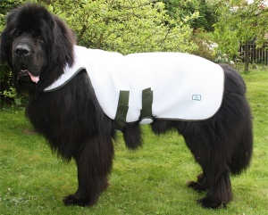 Big Dog World Cool Coat for Dogs